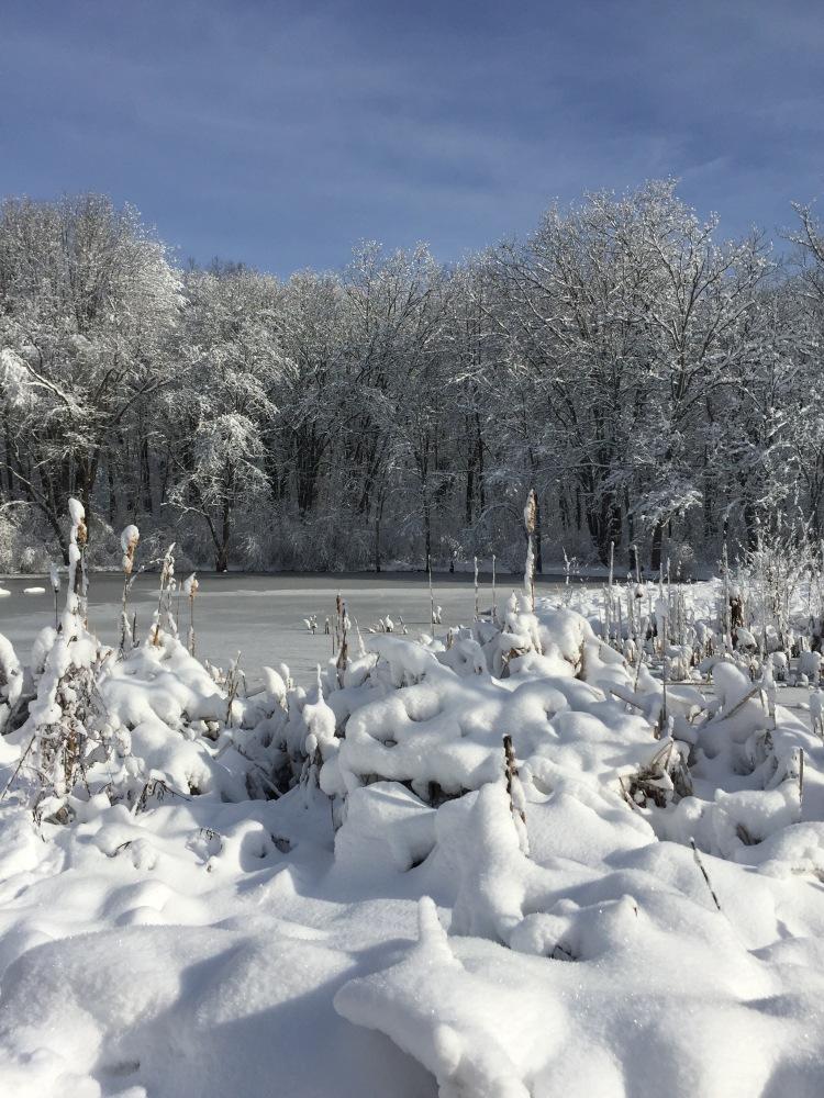 Pollywog Pond