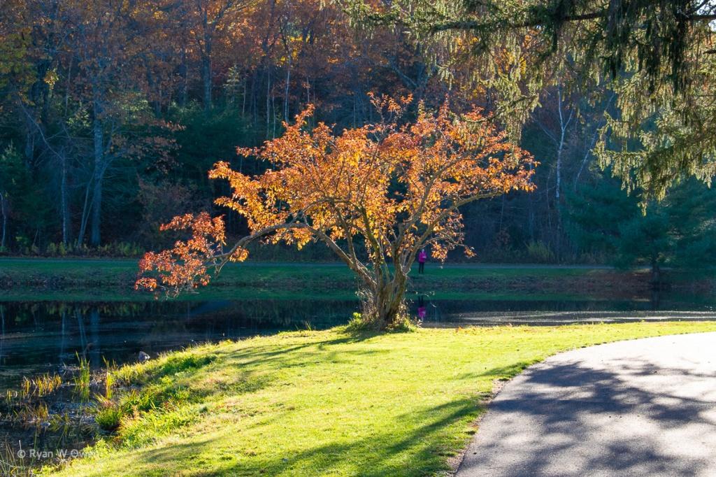Benson Park Walking Trails